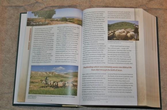 Zondervan First-Century Study Bible (11)