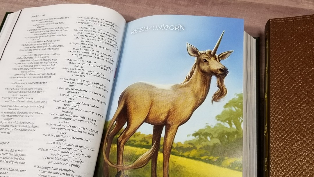 NIV Incredible Creatures and Creations Holy Bible Review