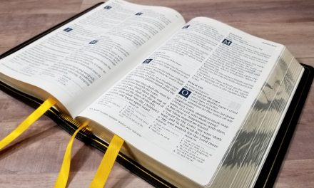 Humble Lamb KJV Lion Bible Review